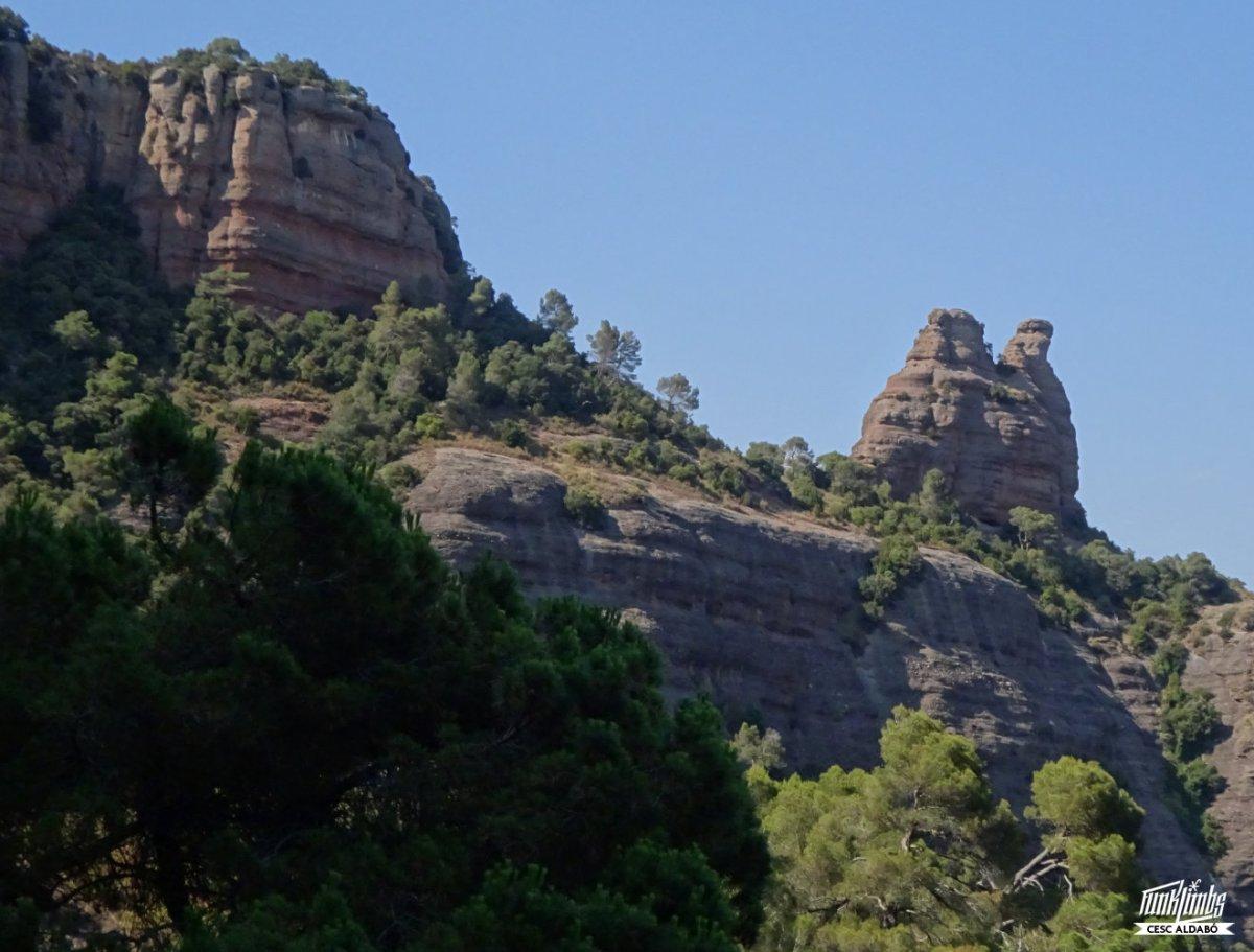 Cabirol al Turó delGurugú